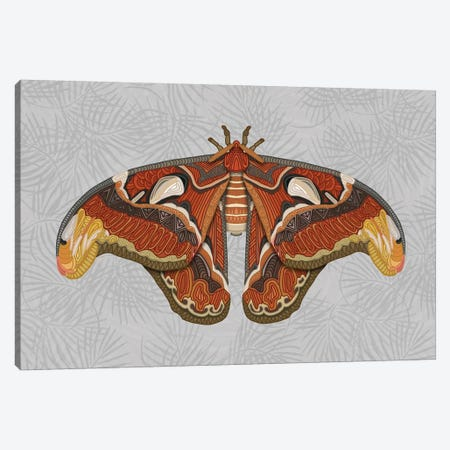 Atlas Moth - Light Canvas Print #ANG201} by Angelika Parker Canvas Art