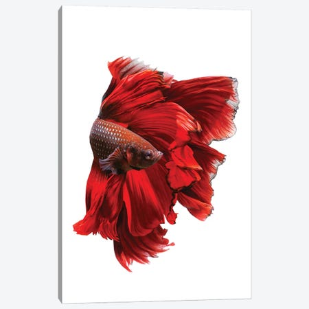 The Red Dress Canvas Print #ANH2} by Andi Halil Canvas Wall Art