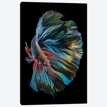 The Betta Fish Canvas Print #ANH4} by Andi Halil Canvas Print