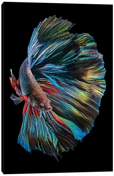 The Betta Fish Canvas Art Print