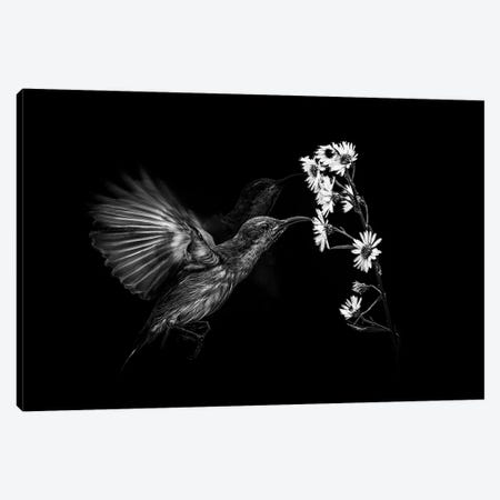 Motion 3-Piece Canvas #ANH5} by Andi Halil Canvas Print