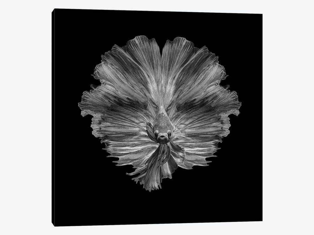 The Flower Of Tail by Andi Halil 1-piece Canvas Wall Art