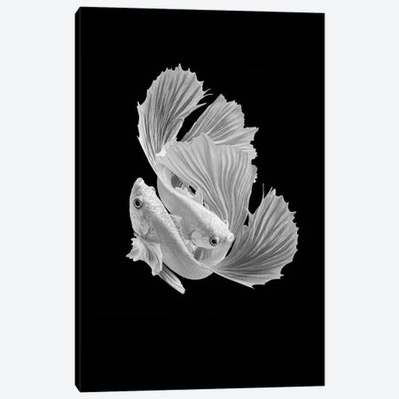 White Love Canvas Print #ANH8} by Andi Halil Canvas Artwork