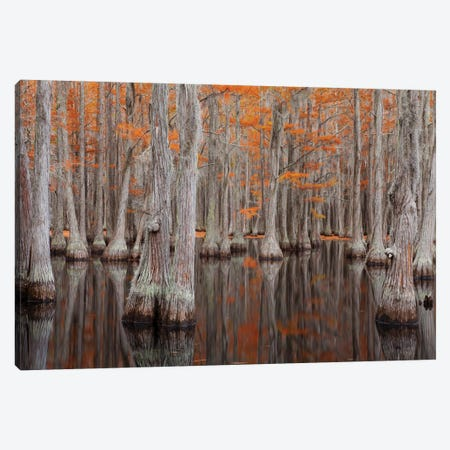 USA, George Smith State Park, Georgia. Fall cypress trees. Canvas Print #ANN10} by Joanne Wells Canvas Art Print