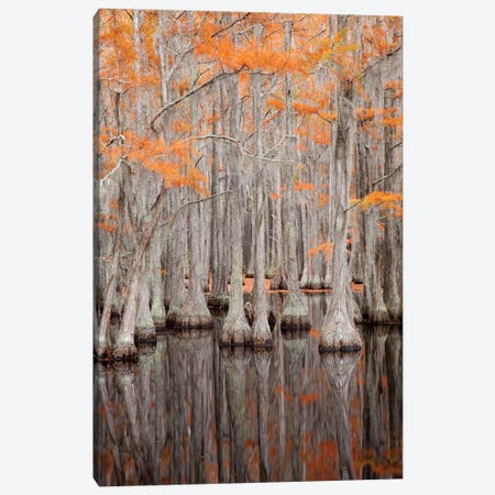 USA, George Smith State Park, Georgia. Fall cypress trees. Canvas Print #ANN11} by Joanne Wells Canvas Art Print
