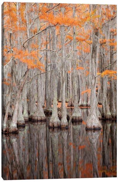 USA, George Smith State Park, Georgia. Fall cypress trees. Canvas Art Print
