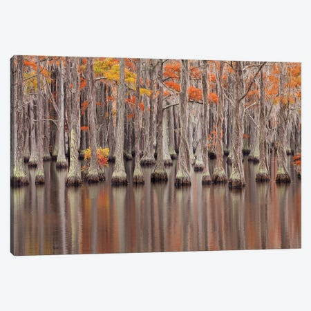 USA, Georgia. Cypress trees in the fall at George Smith State Park. Canvas Print #ANN12} by Joanne Wells Art Print