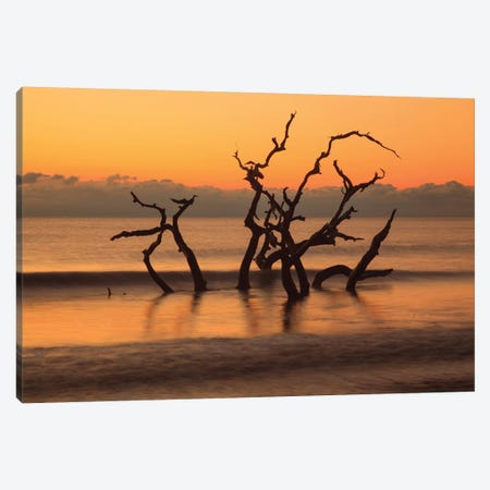 USA, Georgia. Jekyll Island, Driftwood Beach at sunrise. Canvas Print #ANN14} by Joanne Wells Canvas Art