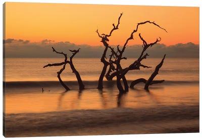 USA, Georgia. Jekyll Island, Driftwood Beach at sunrise. Canvas Art Print