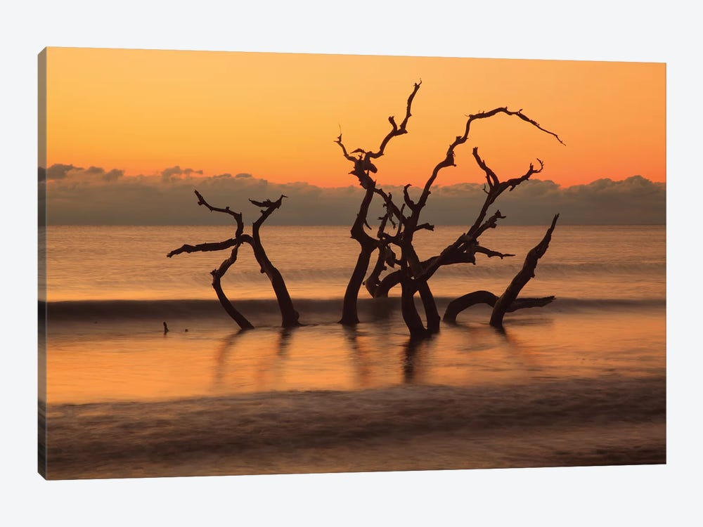 USA, Georgia. Jekyll Island, Driftwood Beach at sunrise. by Joanne Wells 1-piece Canvas Art Print