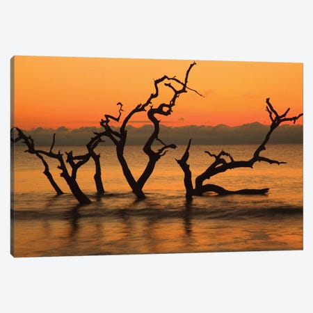 USA, Jekyll Island, Georgia. Driftwood Beach at sunrise. Canvas Print #ANN15} by Joanne Wells Canvas Wall Art