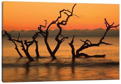USA, Jekyll Island, Georgia. Driftwood Beach at sunrise. Canvas Art Print