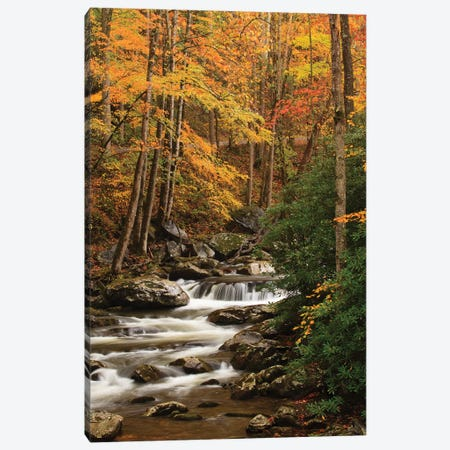 USA, Tennesse. Fall foliage along a stream in the Smoky Mountains. Canvas Print #ANN16} by Joanne Wells Canvas Artwork