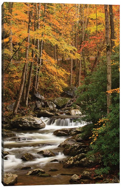 USA, Tennesse. Fall foliage along a stream in the Smoky Mountains. Canvas Art Print