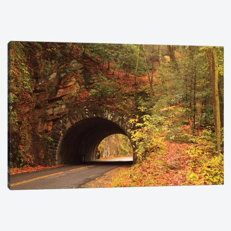 USA, Tennesse. Tunnel along the road to Cades Cove in the fall. Canvas Print #ANN17} by Joanne Wells Canvas Artwork