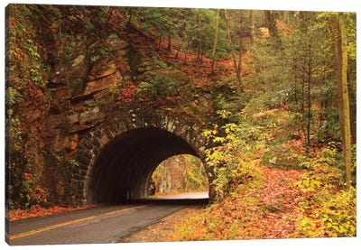 USA, Tennesse. Tunnel along the road to Cades Cove in the fall. Canvas Art Print