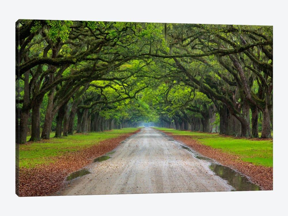 Oak Avenue, Wormsloe Plantation, Savannah, Georgia, USA by Joanne Wells 1-piece Canvas Art Print