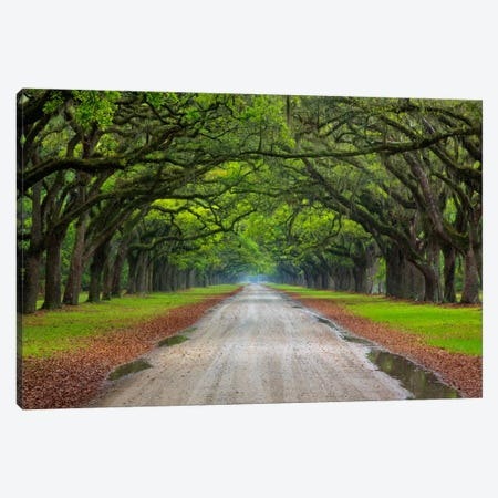 Oak Avenue, Wormsloe Plantation, Savannah, Georgia, USA Canvas Print #ANN1} by Joanne Wells Canvas Wall Art