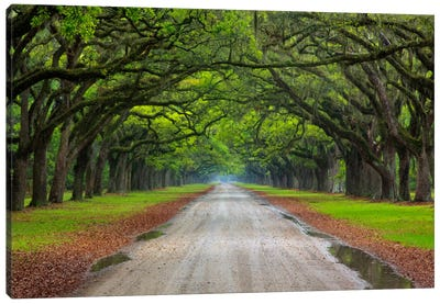 Oak Avenue, Wormsloe Plantation, Savannah, Georgia, USA Canvas Art Print