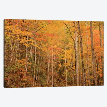 USA, Tennessee. Fall foliage along the Little River in the Smoky Mountains. Canvas Print #ANN21} by Joanne Wells Canvas Wall Art