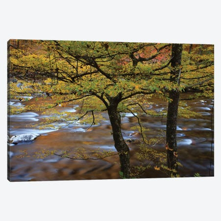USA, Tennessee. Trees along the Little River in the Smoky Mountains. Canvas Print #ANN23} by Joanne Wells Canvas Art