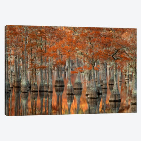 Mill Pond Cypress Trees And Their Reflections, George L. Smith State Park, Emanuel County, Georgia, USA Canvas Print #ANN3} by Joanne Wells Canvas Art