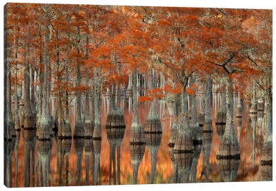 Mill Pond Cypress Trees And Their Reflections, George L. Smith State Park, Emanuel County, Georgia, USA Canvas Art Print