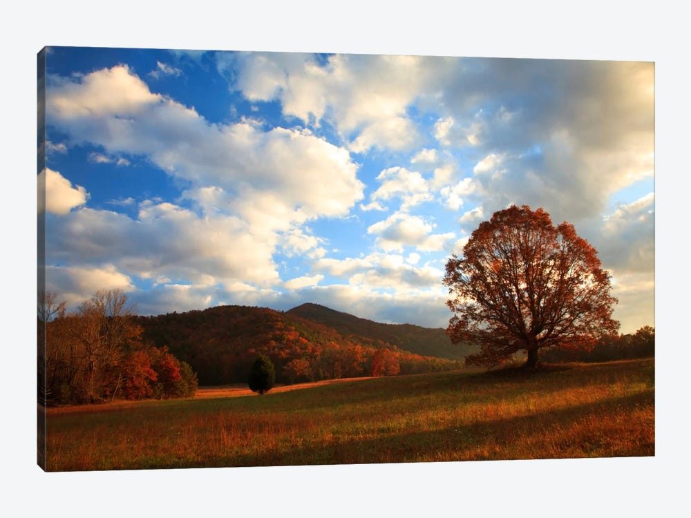 Late Autumn Sunrise, Cades Cove, Great Smoky Mountains National Park, Tennessee, USA by Joanne Wells 1-piece Canvas Artwork