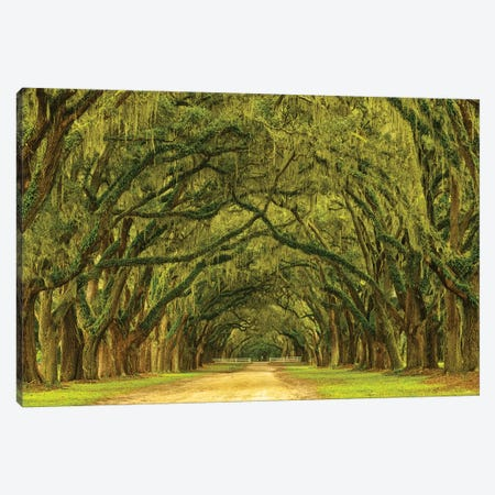 USA, Georgia, Savannah. Mile long oak drive Canvas Print #ANN5} by Joanne Wells Art Print