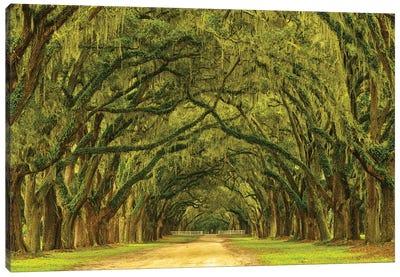 USA, Georgia, Savannah. Mile long oak drive Canvas Art Print