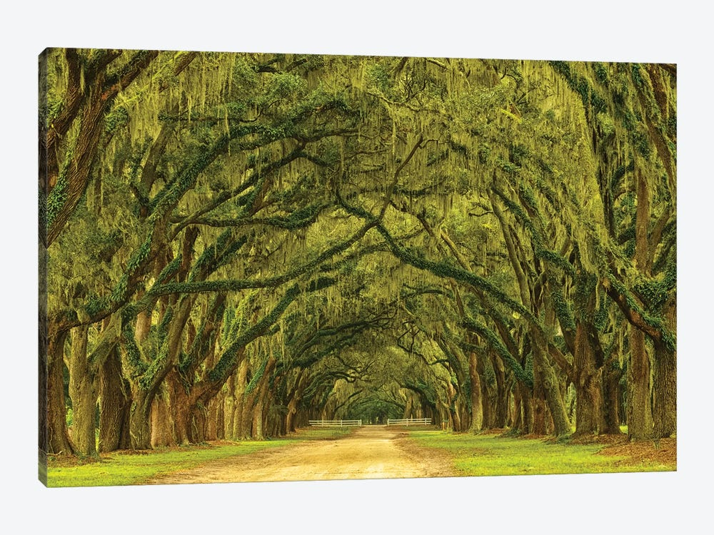 USA, Georgia, Savannah. Mile long oak drive by Joanne Wells 1-piece Art Print