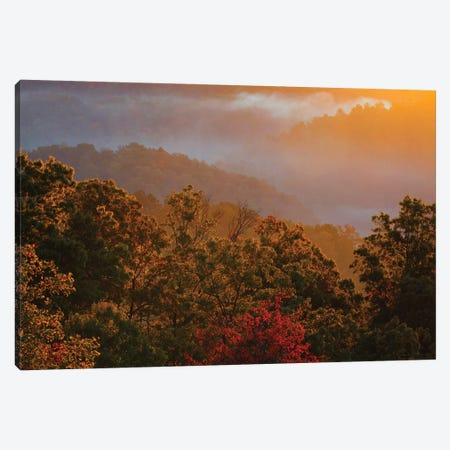 USA, Tennessee. Great Smoky Mountain National Park, trees and fog at sunrise. Canvas Print #ANN6} by Joanne Wells Art Print