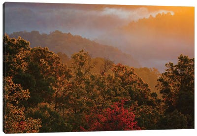 USA, Tennessee. Great Smoky Mountain National Park, trees and fog at sunrise. Canvas Art Print
