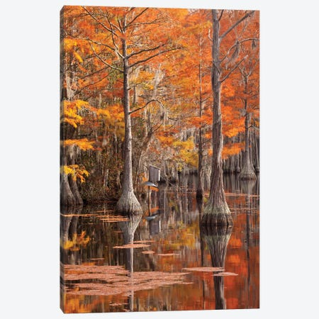 USA, George Smith State Park, Georgia. Fall cypress trees with wood duck box. Canvas Print #ANN8} by Joanne Wells Canvas Wall Art