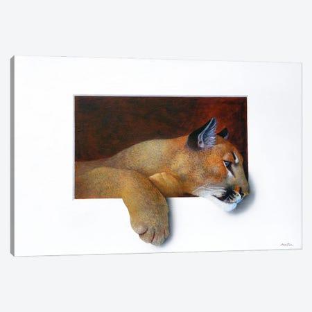 Cougar Canvas Print #ANO14} by Alan Weston Art Print
