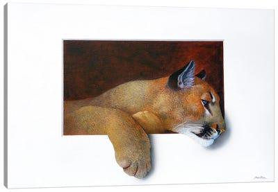 Cougar Canvas Art Print