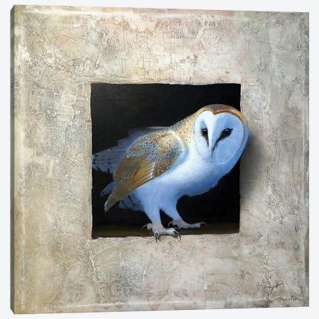 Barn Owl I Canvas Print #ANO3} by Alan Weston Art Print