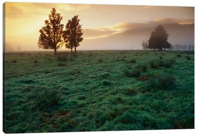 Dawn Light Over South Island Farmland, New Zealand Canvas Art Print