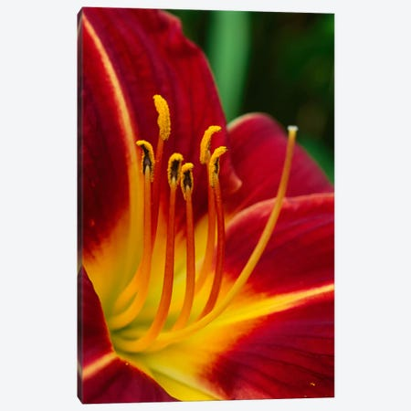 Flower Close Up Showing Pistil And Stamens, New Zealand Canvas Print #ANR3} by Andy Reisinger Canvas Art Print