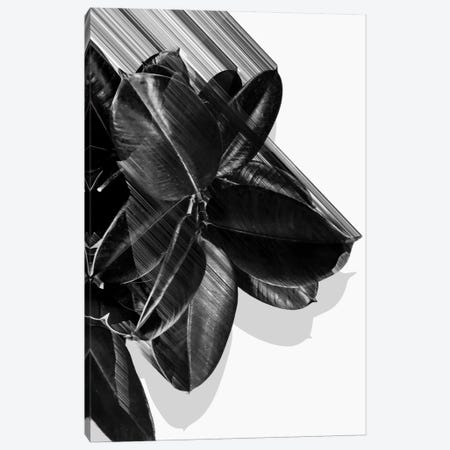 We Crush In B&W Canvas Print #APR100} by Adam Priester Art Print