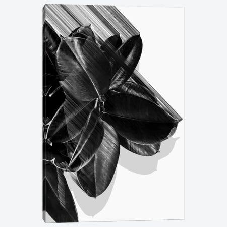 We Crush In B&W Canvas Print #APR100} by Adam Priester Art Print