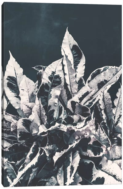 Dusk Canvas Print #APR23