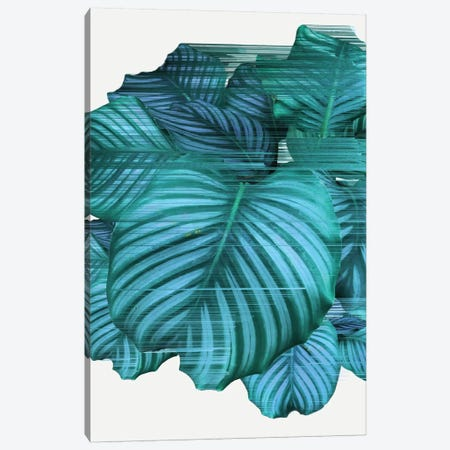 Fast Calathea Canvas Print #APR38} by Adam Priester Canvas Print