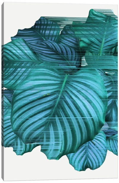 Fast Calathea Canvas Art Print