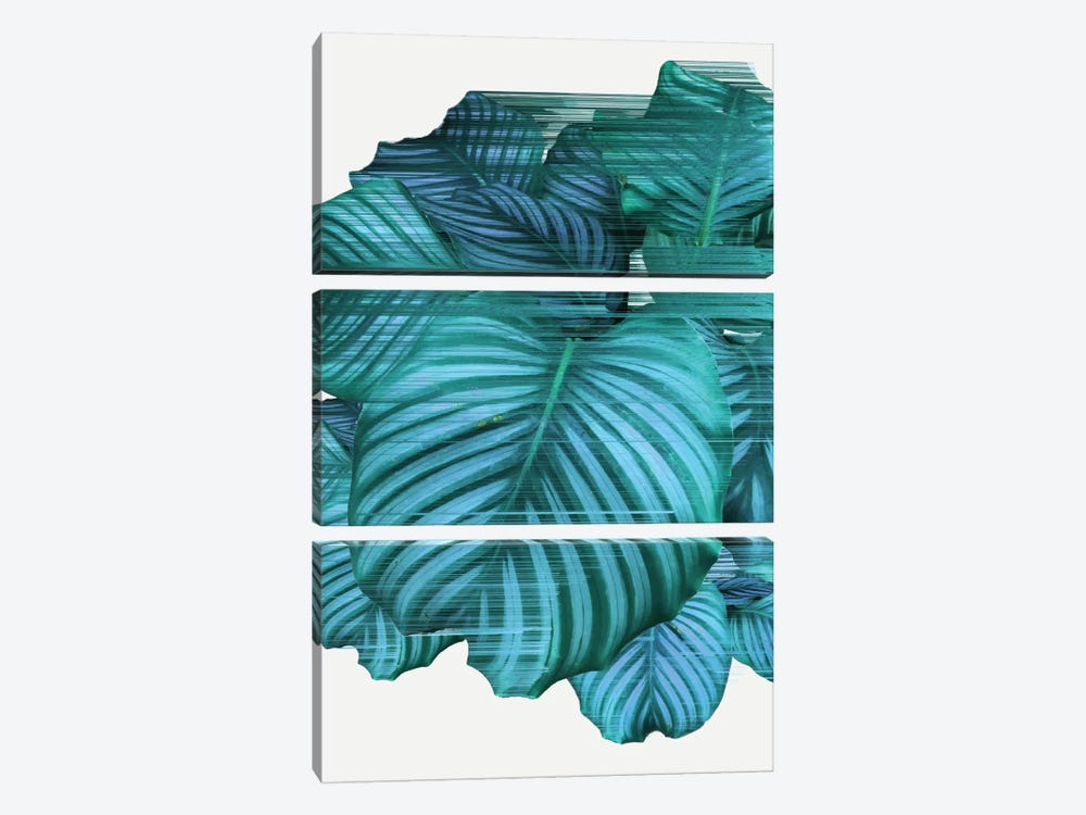 Fast Calathea 3-piece Canvas Print