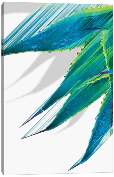 Soaring Agave Canvas Art Print