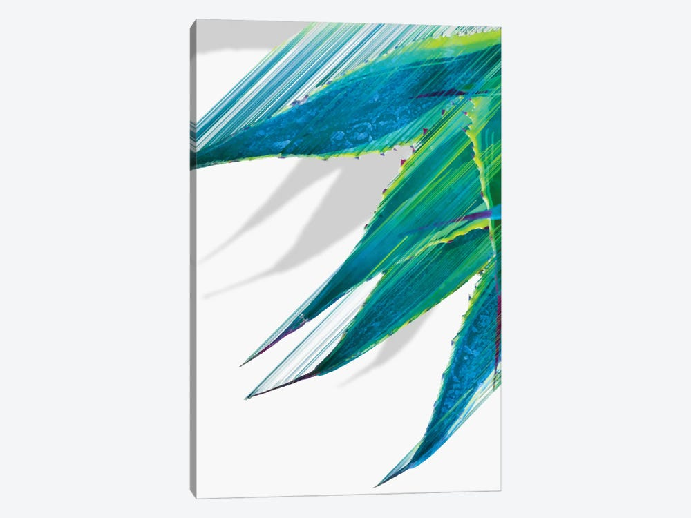 Soaring Agave by Adam Priester 1-piece Canvas Art Print