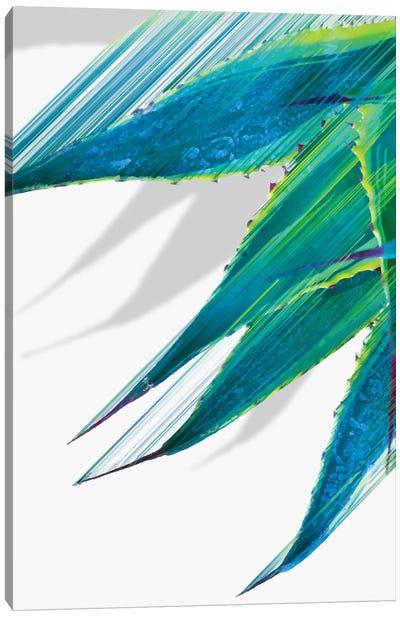 Soaring Agave Canvas Art Print