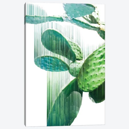The Fastest Cactus Canvas Print #APR89} by Adam Priester Canvas Art