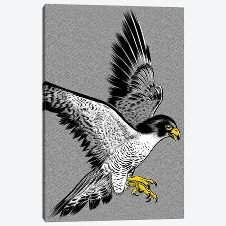 Hawk Sketch Canvas Print #APZ342} by Alberto Perez Canvas Wall Art